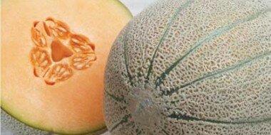 Rockmelon