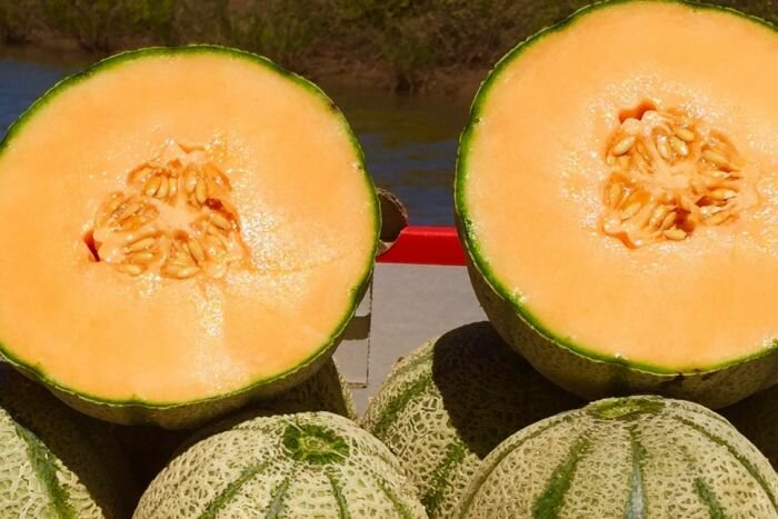 Rockmelon industry ramps up food safety guidelines to restore consumer confidence